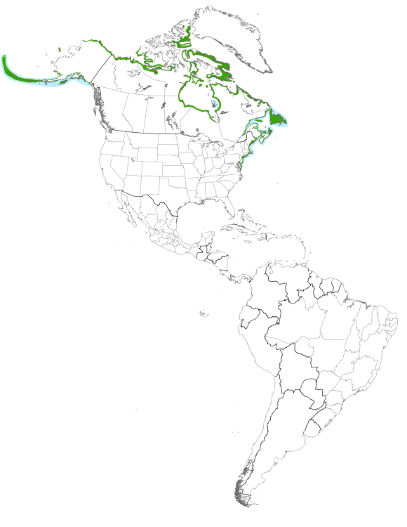 Map displaying the species distribution or migratory routes